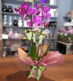 Anneler Gününe Çiçek Gönder - 512