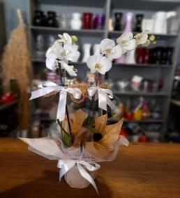 Anneler İçin Çiçek Siparişi - 50