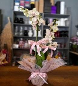 Anneye Gönderilecek En Güzel Çiçek Gönder - 345