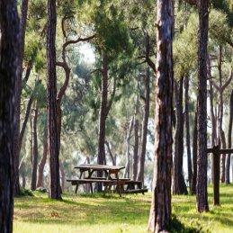 Osmaniye Piknik Yerleri