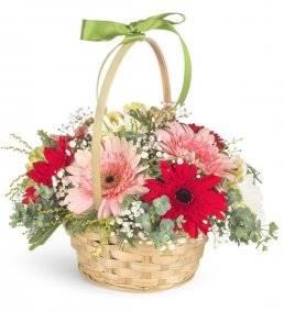 Sepette Baharın Renkli Çiçekleri